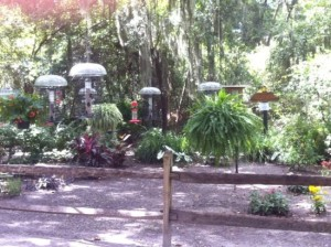 Jekyll Island bird sanctuary